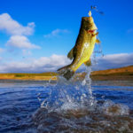Ultimate Guide to Bass Fishing for Beginners