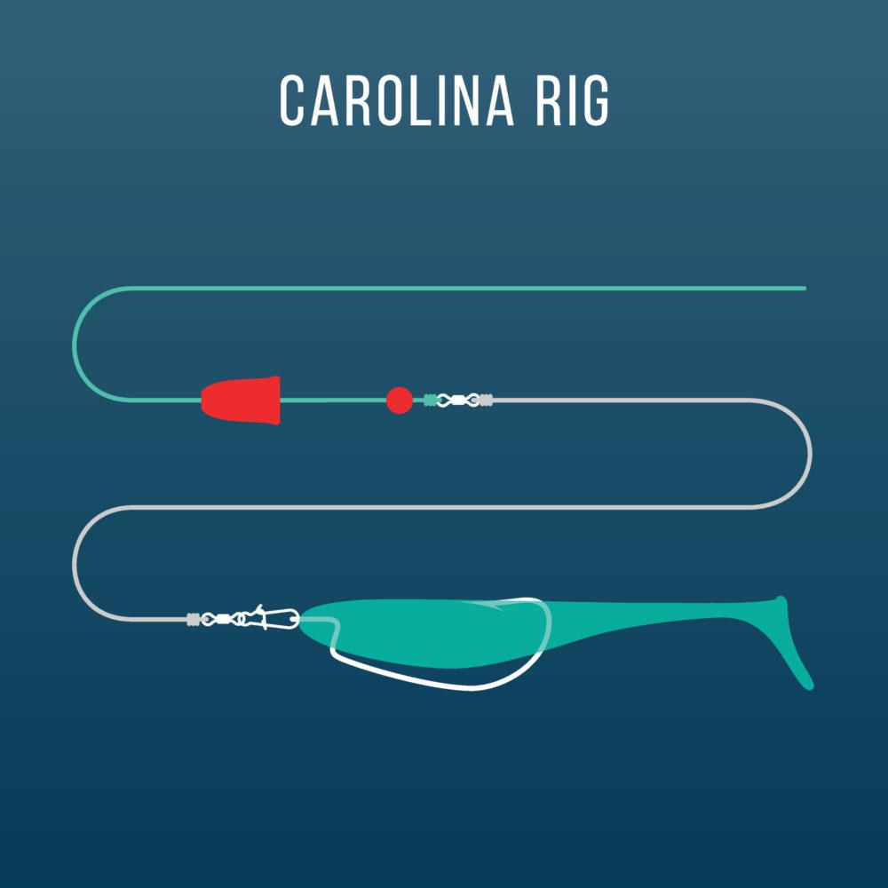 Ultimate Guide to Carolina Rig Fishing